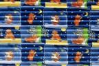 Roto Faltstore Blau mit Bären-Motiven - lichtundurchlässig, Dekornummer F-161